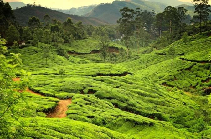 6-night-private-kerala-tour-from-kochi-in-kochi-276981